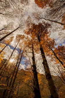 Jesienny krajobraz pięknego lasu z wysokimi drzewami