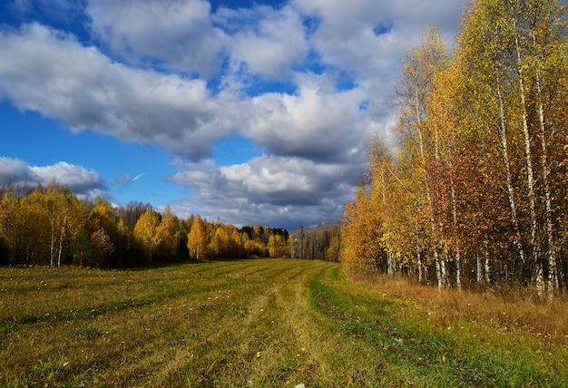 Jesienny krajobraz pole i żółte brzozy