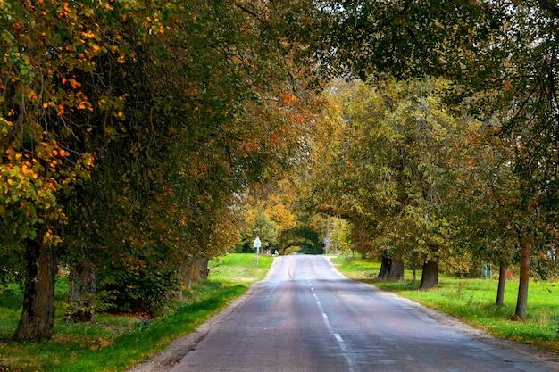 Jesienny krajobraz. samotna wiejska droga z liściastymi alejkami.