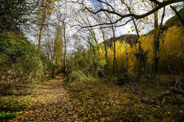 Jesienny krajobraz. ścieżka w lesie ze światłami i cieniami. dywan z opadłych liści i magicznego i zaczarowanego lasu. segovia, hiszpania.