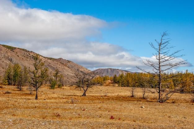 Jesienny krajobraz stepowy ze wzgórzami i suchymi drzewami na pierwszym planie