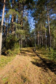 Jesienny krajobraz w mieszanym lesie