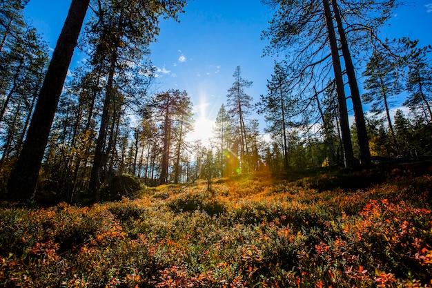 Jesienny krajobraz w parku narodowym yllas pallastunturi, laponia, finlandia