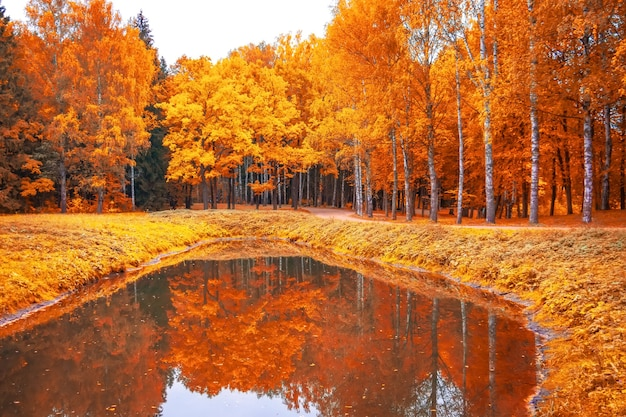 Jesienny krajobraz w parku ze stawem i odbiciem w nim.