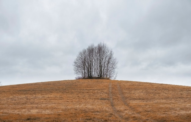 Jesienny krajobraz w stylu minimalizmu, grupa drzew na wzgórzu w skoszonym żółtym polu
