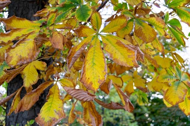 Jesienny krajobraz z brązowymi, pomarańczowymi, zielonymi i suchymi liśćmi drzew, które wkrótce spadną z drzew w jardin del retiro w madrycie, hiszpania