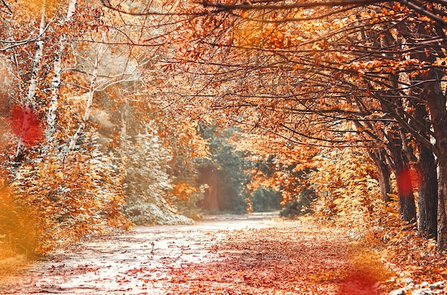 Jesienny krajobraz z drogą i drzewami