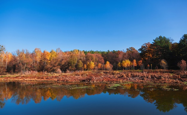 Jesienny krajobraz z drzewami odbicia w rzece.