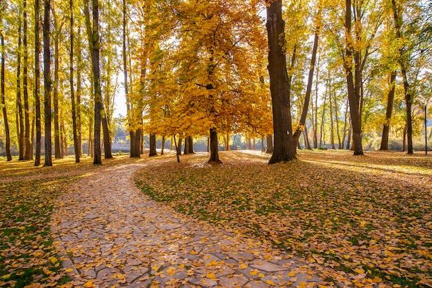 Jesienny krajobraz z drzewami z liśćmi na ziemi, obejmujący część drogi.