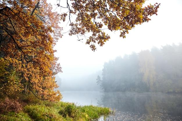 Jesienny krajobraz z jeziorem leśnym i gałęziami dębu z pożółkłymi liśćmi