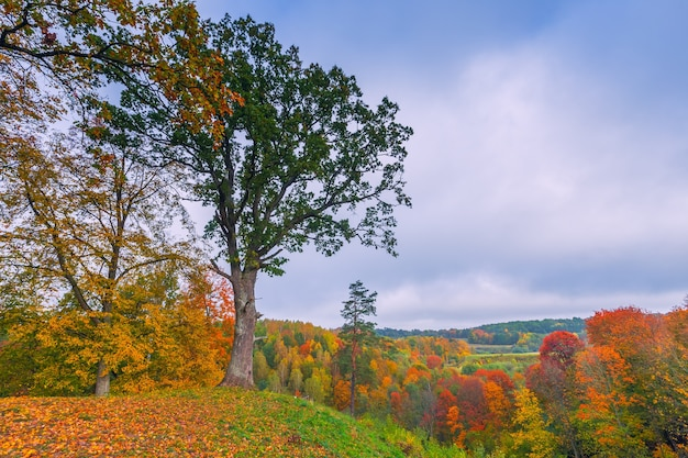 Jesienny krajobraz z kolorowymi drzewami, litwa