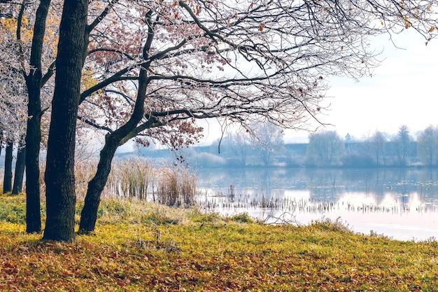 Jesienny krajobraz z pokrytymi mrozem drzewami nad rzeką