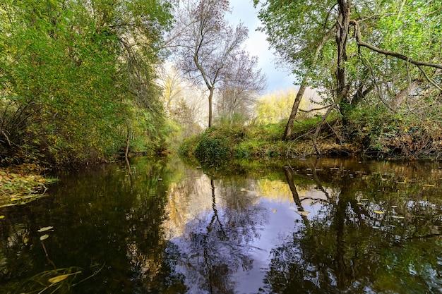 Jesienny krajobraz z rzeką niosącą opadłe liście, złote i zielone drzewa i odbicia w wodzie.