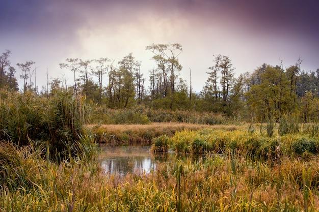 Jesienny krajobraz z rzeką, trzcinami, drzewami i ciemnymi chmurami. jesienią nad rzeką gęste zarośla