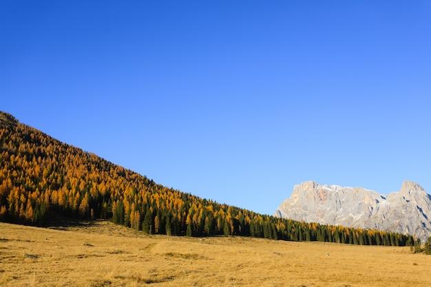 Jesienny krajobraz z włoskich alp. żółte drzewa. piękny widok na dolomity