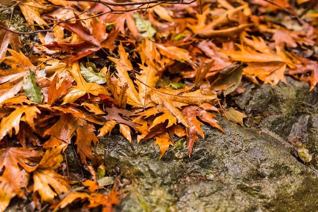 Jesienny krajobraz z wodospadem w troodos na cyprze