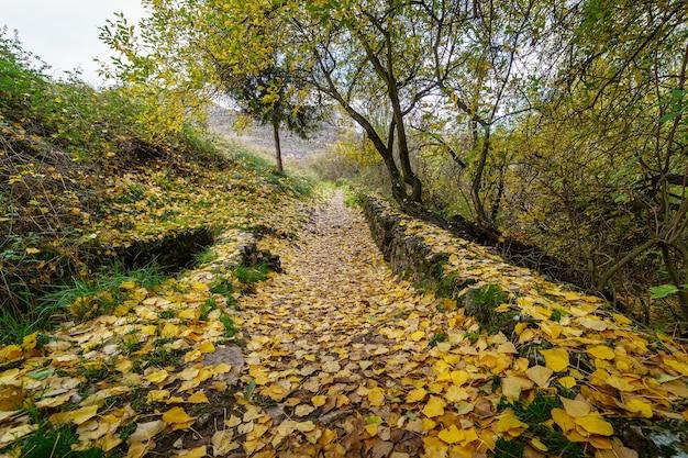 Jesienny krajobraz ze ścieżką między drzewami i drewnianym płotem. opadłe liście na ziemi. hiszpania.