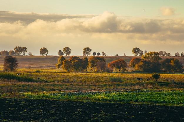 Jesienny krajobraz, żółte drzewa w porannej mgle