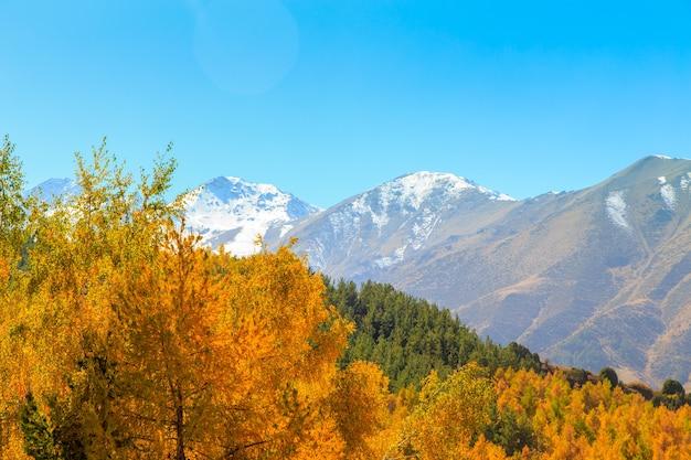 Jesienny krajobraz. żółte i zielone drzewa. góry i błękitne niebo.