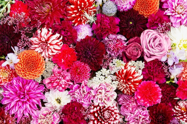 Jesienny kwiat kolorowy tło. klomb, dywan z kolorowych kwiatów. widok z góry