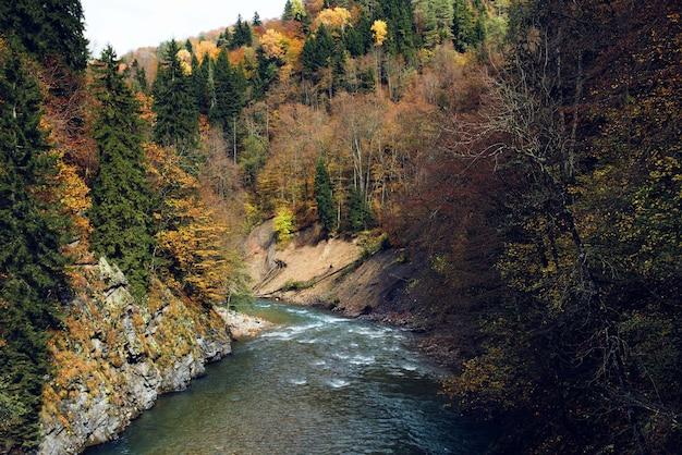 Jesienny las krajobraz drzewa natura świeże powietrze
