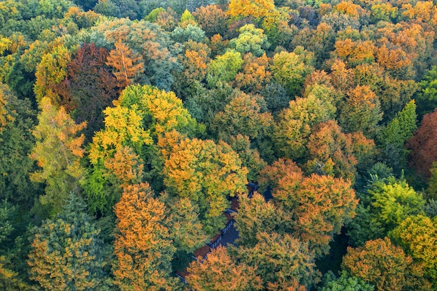 Jesienny las liściasty, widok z lotu ptaka, wzór lub tekstura.