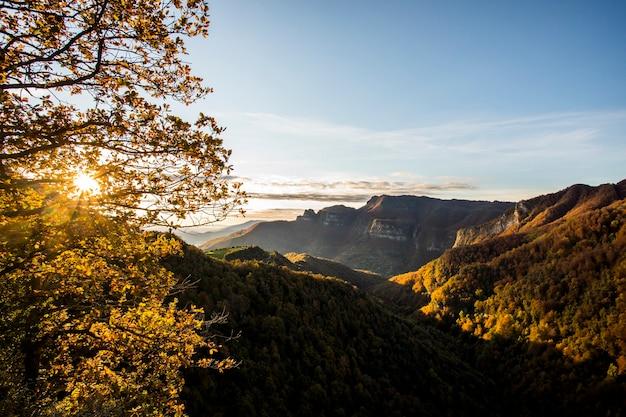 Jesienny las na szczycie puigsacalm, la garrotxa, hiszpania.