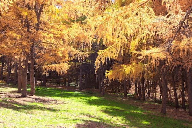 Jesienny las. piękne drzewa bzów. jasne, naturalne kolory. naturalny krajobraz jesieni.