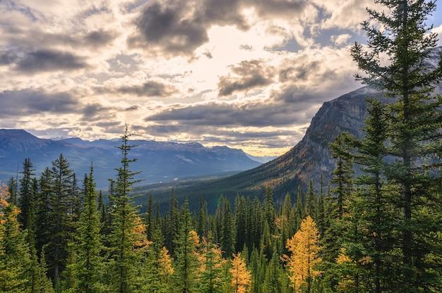 Jesienny las sosnowy z górami skalistymi rano w parku narodowym banff, kanada