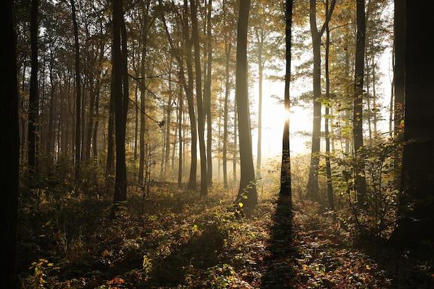 Jesienny las w mglistej pogodzie podczas wschodu słońca