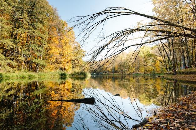 Jesienny las w słońcu z odbiciami i złotymi liśćmi