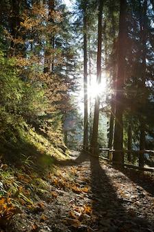 Jesienny las w słoneczny dzień. jesienny liść