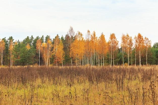 Jesienny las w słoneczny dzień, tło, złoty jesienny widok panoramiczny, baner, panorama