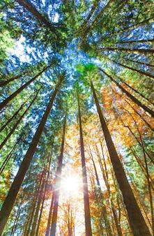 Jesienny las w słoneczny dzień