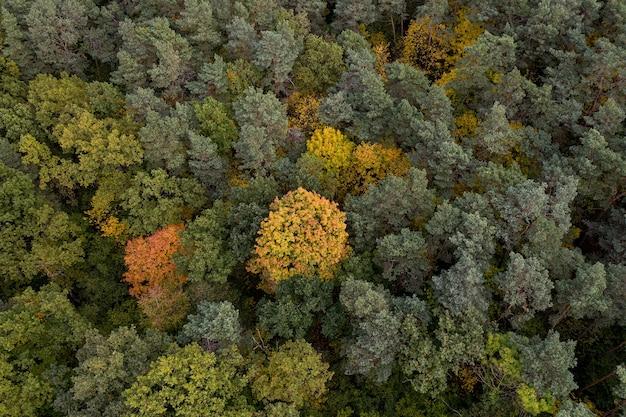 Jesienny las, widok z lotu ptaka
