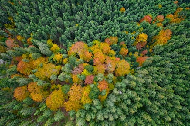 Jesienny las z lotu ptaka, żółte i zielone drzewa. tło lub tekstura.