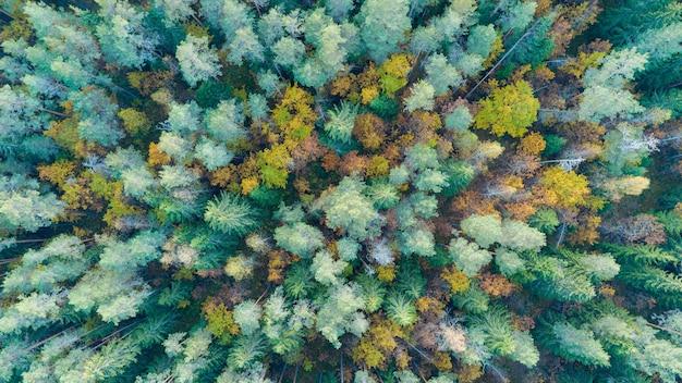 Jesienny las z lotu ptaka
