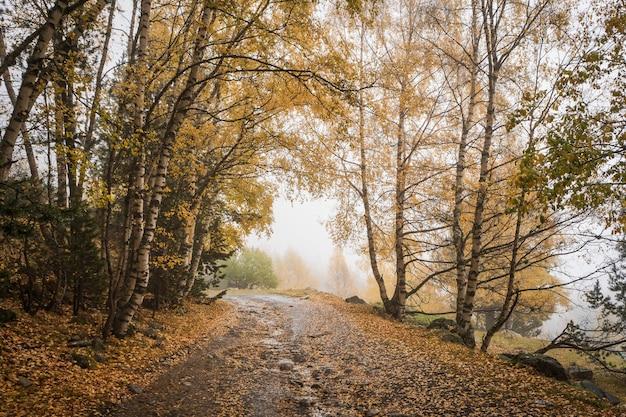 Jesienny las z mgłą