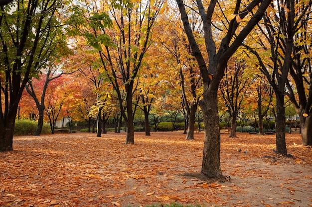 Jesienny liść i jesień seul korea południowa