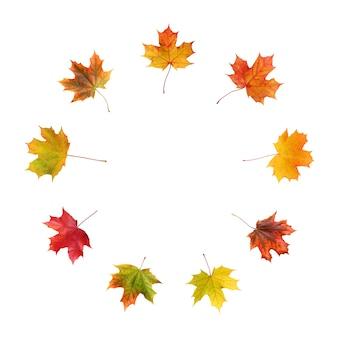 Jesienny liść klonu na białym tle na białej powierzchni