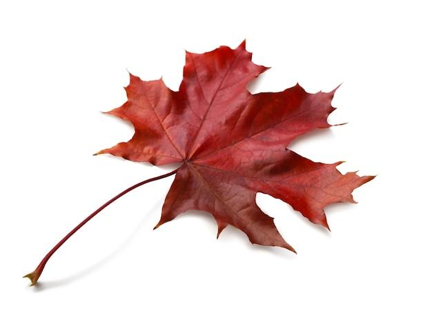 Jesienny liść klonu na białym tle na białym tle z cieniami