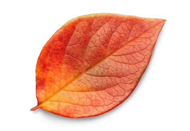 Jesienny liść na białym tle z cieniami, ścieżka przycinająca do izolacji bez cieni na białym tle
