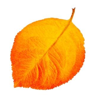 Jesienny liść na białym tle