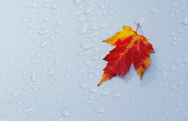Jesienny liść na mokrym srebrnym tle jesienne tła płaski układ widok z góry wysokiej jakości zdjęcie