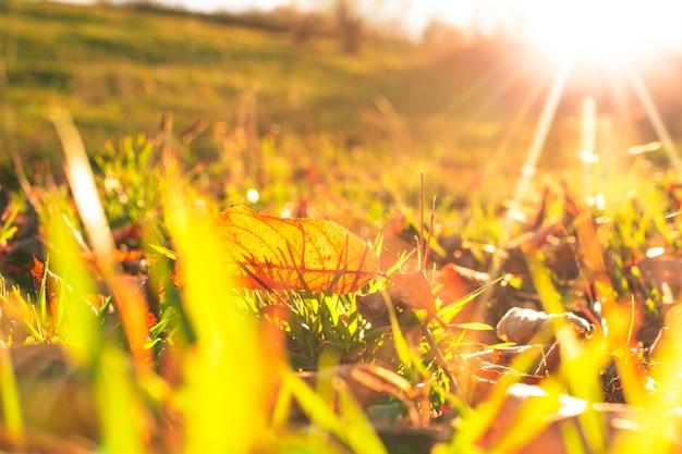 Jesienny liść nad zieloną trawą i złotym światłem słonecznym