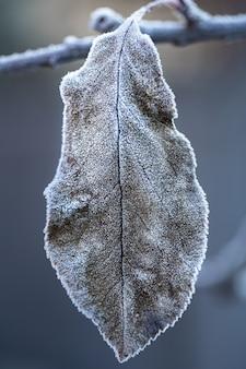 Jesienny liść pokryty kryształkami lodu. wczesny poranek w zimnych porach roku.