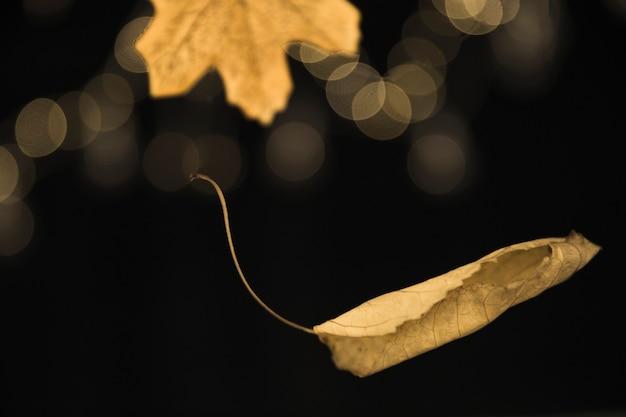 Jesienny liść spada