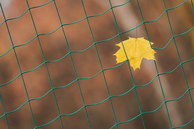 Jesienny liść utknął na siatce bramkarza