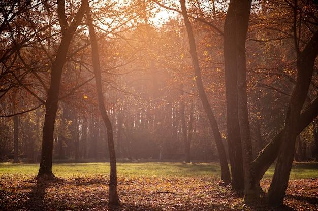 Jesienny obraz. natura. jesienne drzewa z opadłymi liśćmi w promieniach słońca.