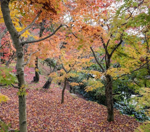 Jesienny ogród w świątyni eikando lub zenrinji w kioto, japonia. eikando słynie z zachwycających jesiennych kolorów